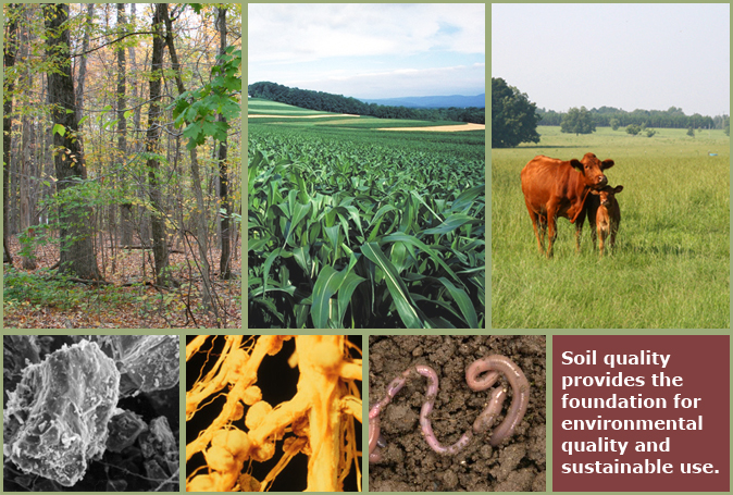 montage of soil quality photos
