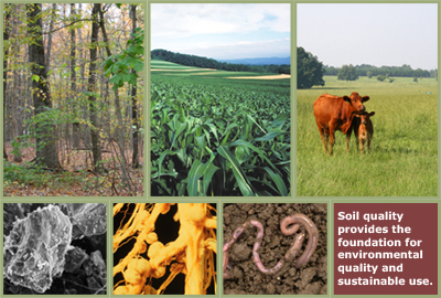 Image gallery natural environments collage for Quality topsoil